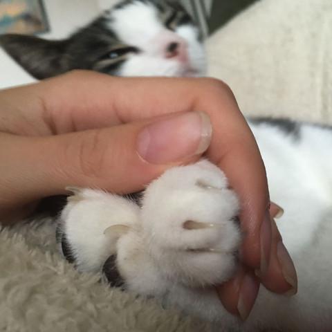 Pfoten  - (Tiere, Katzen, Zoologie)