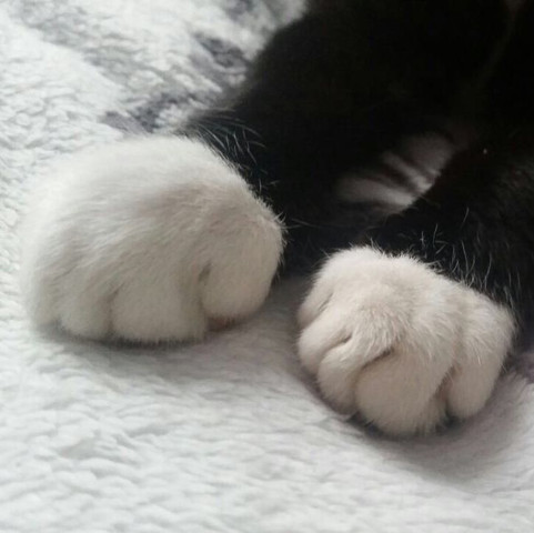 katzenpfote ist total geschwollen tiere arzt katze. Black Bedroom Furniture Sets. Home Design Ideas
