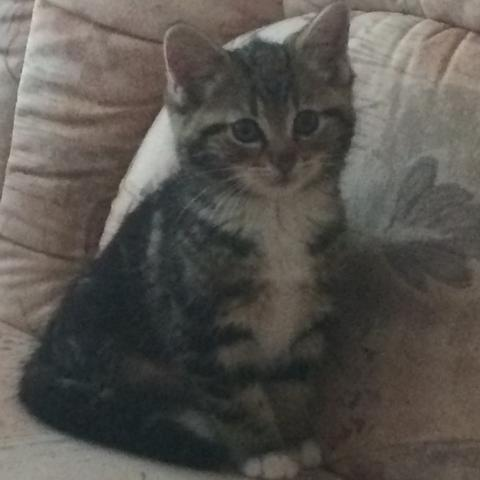 Mit 3 Monaten - (Katze, Rasse)