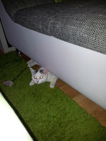 Lilli - (Tiere, Katze, Haustiere)