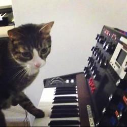 Synthcat - (Musikinstrumente, House, Musikproduktion)