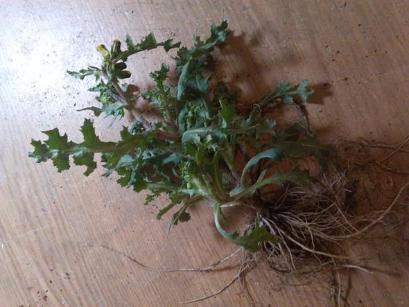 Pflanze2 - (Name, Pflanzen, Unkraut)