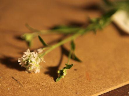 kraut - (Biologie, Garten, Landwirtschaft)