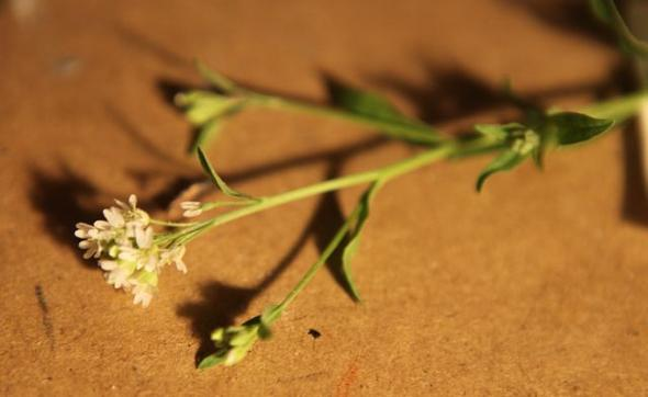 kraut2 - (Biologie, Garten, Landwirtschaft)