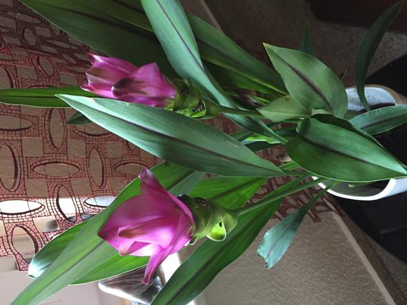 Pflanzenart - (Pflanzen, Blumen)