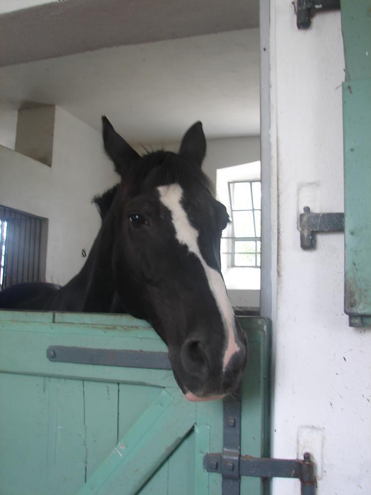 mutter und tochter ficken mit pferd