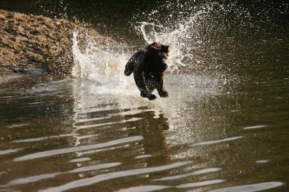 bei ihrem Wasser! - (Hund, Casting, Fotograf)