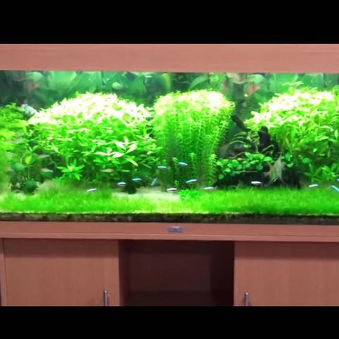 Kennt Ihr Pflanzen Die Sehr Stark In Die Breite Wachsen Fische
