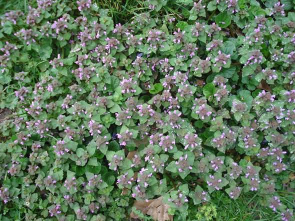 Kennt jemand den Namem dieser Pflanze?