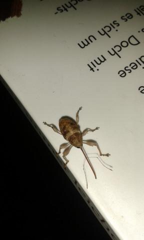 Käfer - (Tiere, Biologie, Wissen)