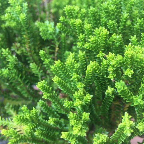 bild2 - (Garten, Pflanzen, Blumen)