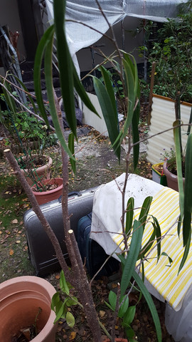 Am Müll gefunden - (Zimmerpflanzen, Pflegetipps)