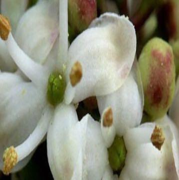 Bild 2  - (Pflanzen, Botanik)