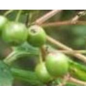 Bild 3  - (Pflanzen, Botanik)