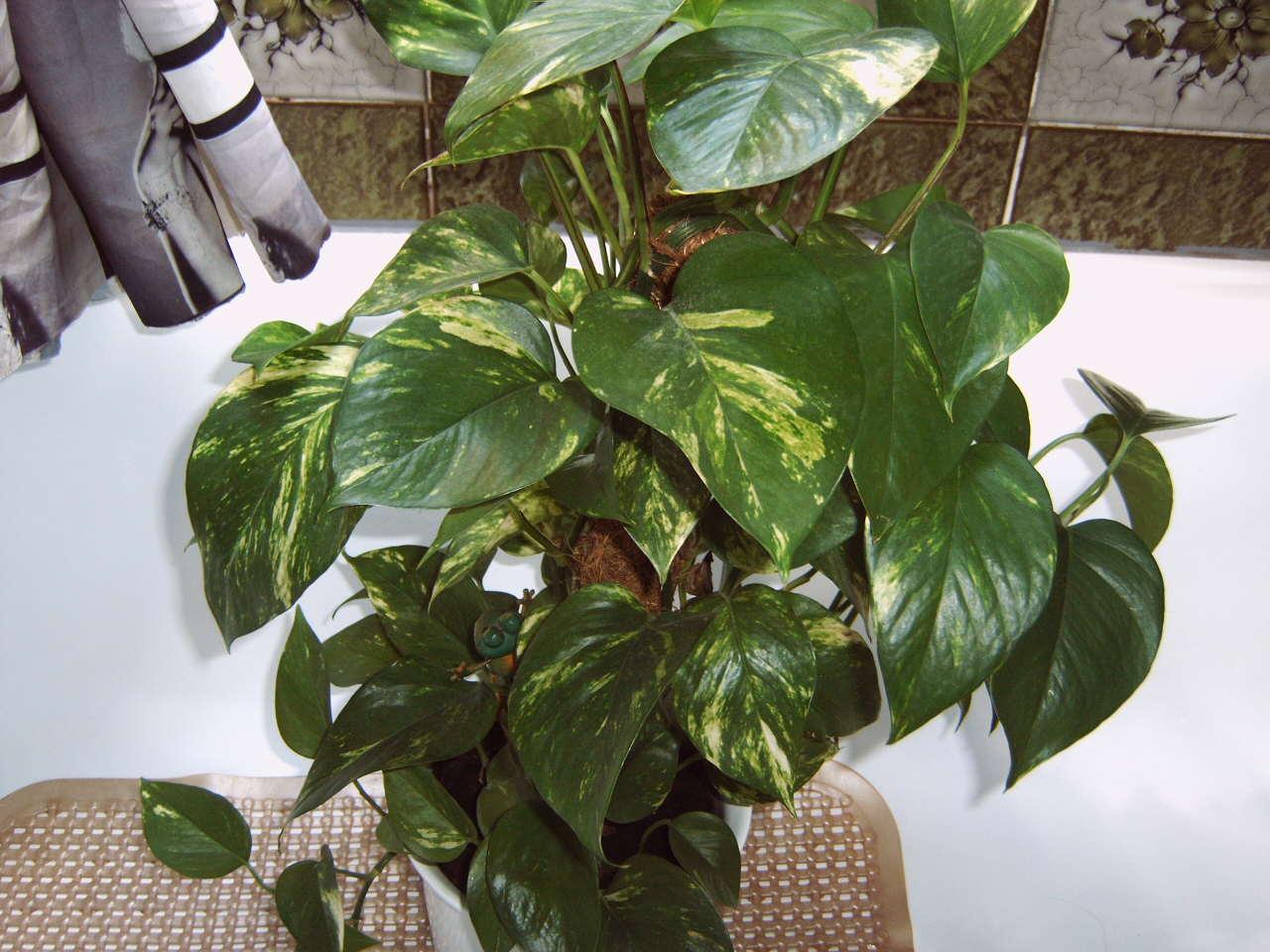 kennt jemand diese pflanze und ist sie f r katzen giftig. Black Bedroom Furniture Sets. Home Design Ideas