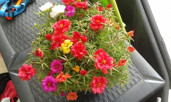 Kennt Jemand diese Pflanze/Blume und weiß wie sie heißt?