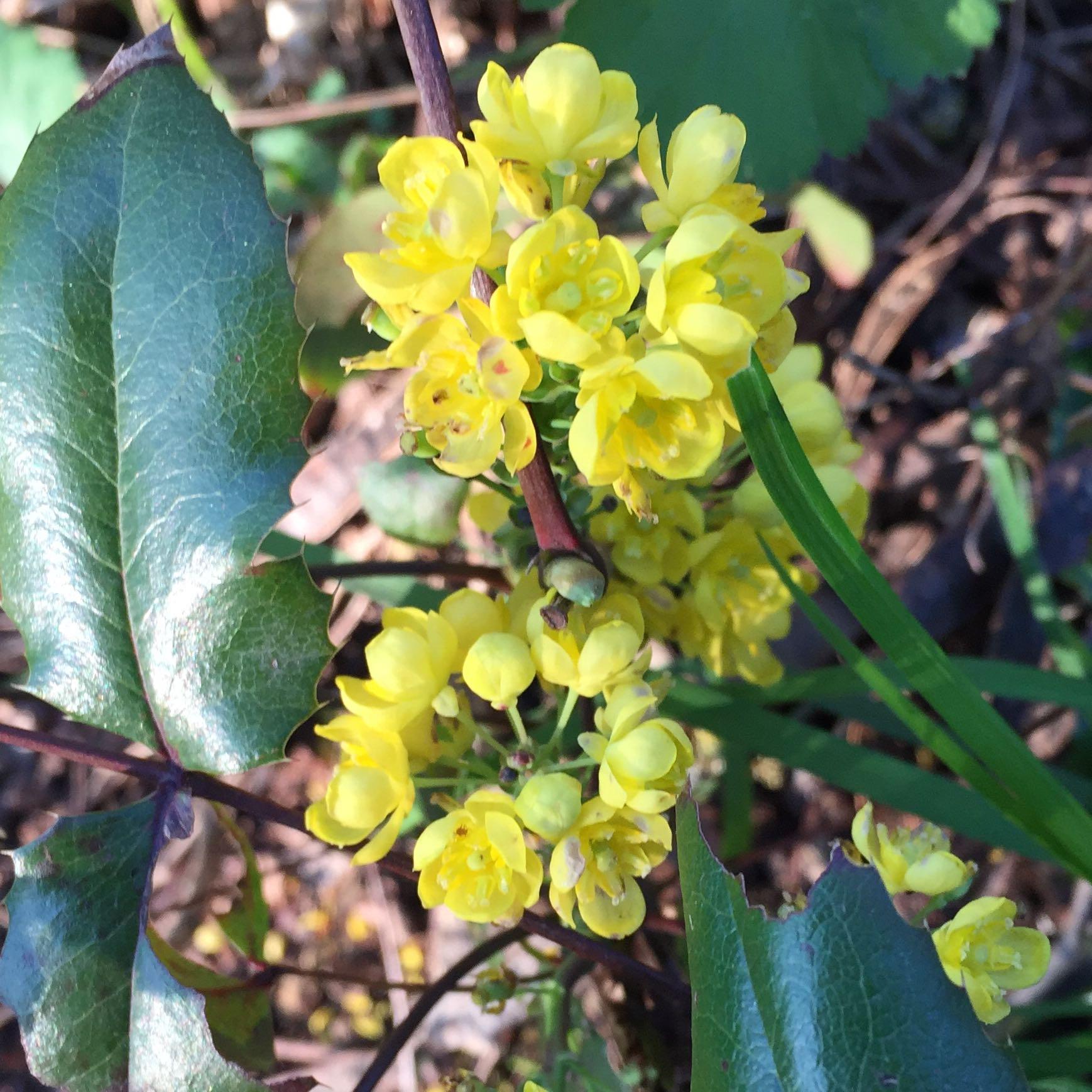 kennt jemand diese pflanze gelbe bl te stachelige bl tter. Black Bedroom Furniture Sets. Home Design Ideas