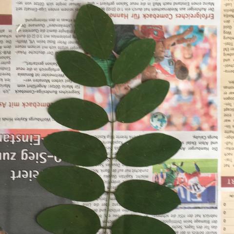 Blatt oder Kraut? - (Pflanzen, Wald, Kräuter)