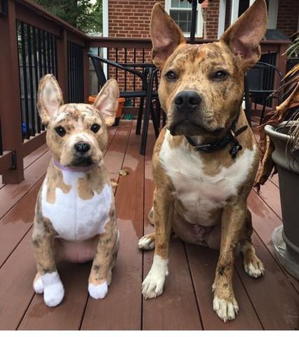 Kennt Jemand Diese Rasse Mix Tiere Hund