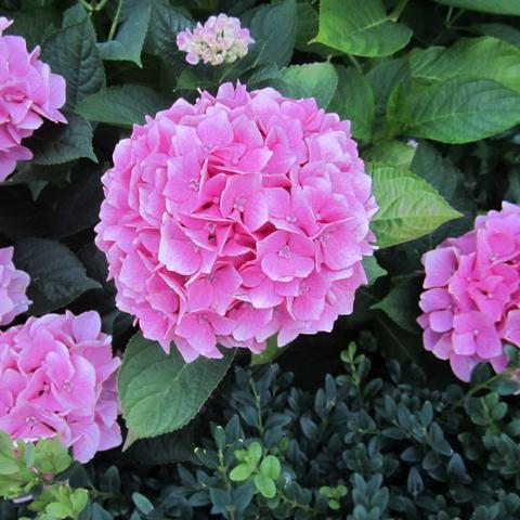 Kennt Jemand Diese Schöne Blume Garten Blumen