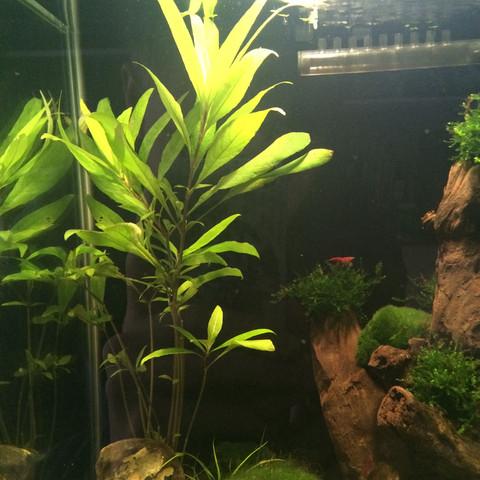 Kennt Jemand Diese Wasserpflanze Pflanzen Aquarium Aquaristik