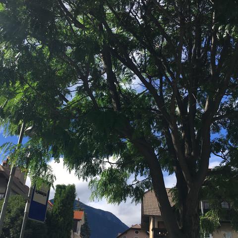 3von3 - (Natur, Baum, Alpen)