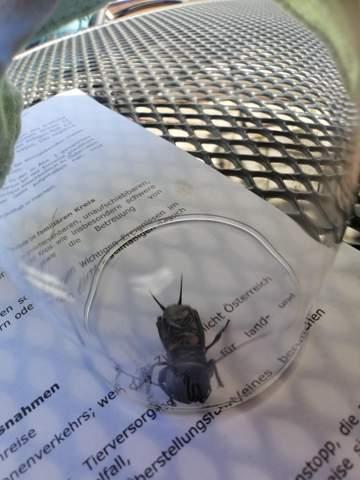 Kennt jemand dieses Insekt?