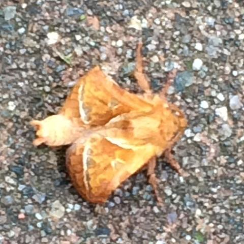Bild 2 - (Insekten, Stich, stachel)