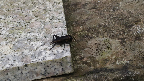 01 - (Tiere, Insekten)
