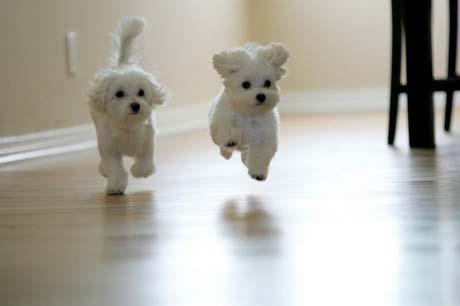 das sind die Hunde/Welpen - (Tiere, Hund)