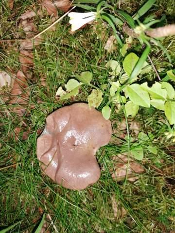 Kennt wer diesen Pilz     ?