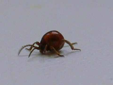 Kleine Käfer Im Bad