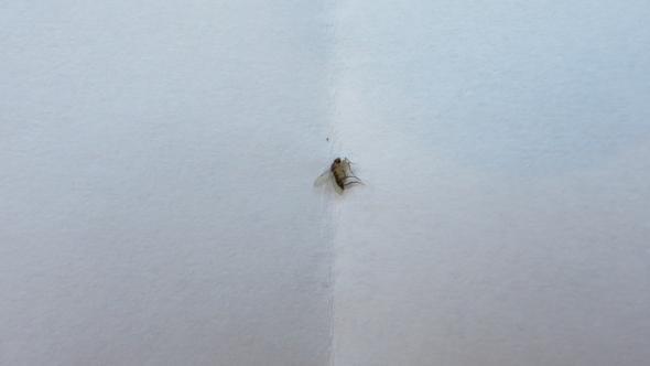Eine der toten Fliegen... - (Tiere, Wohnung, Haushalt)