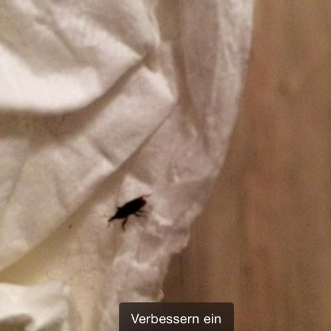 Die sind sehr sehr klein   - (Haus, Insekten, klein)