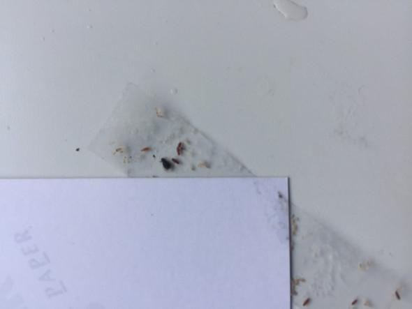 Kleine Schwarz Braune Käfer An Der Wand? (Tiere