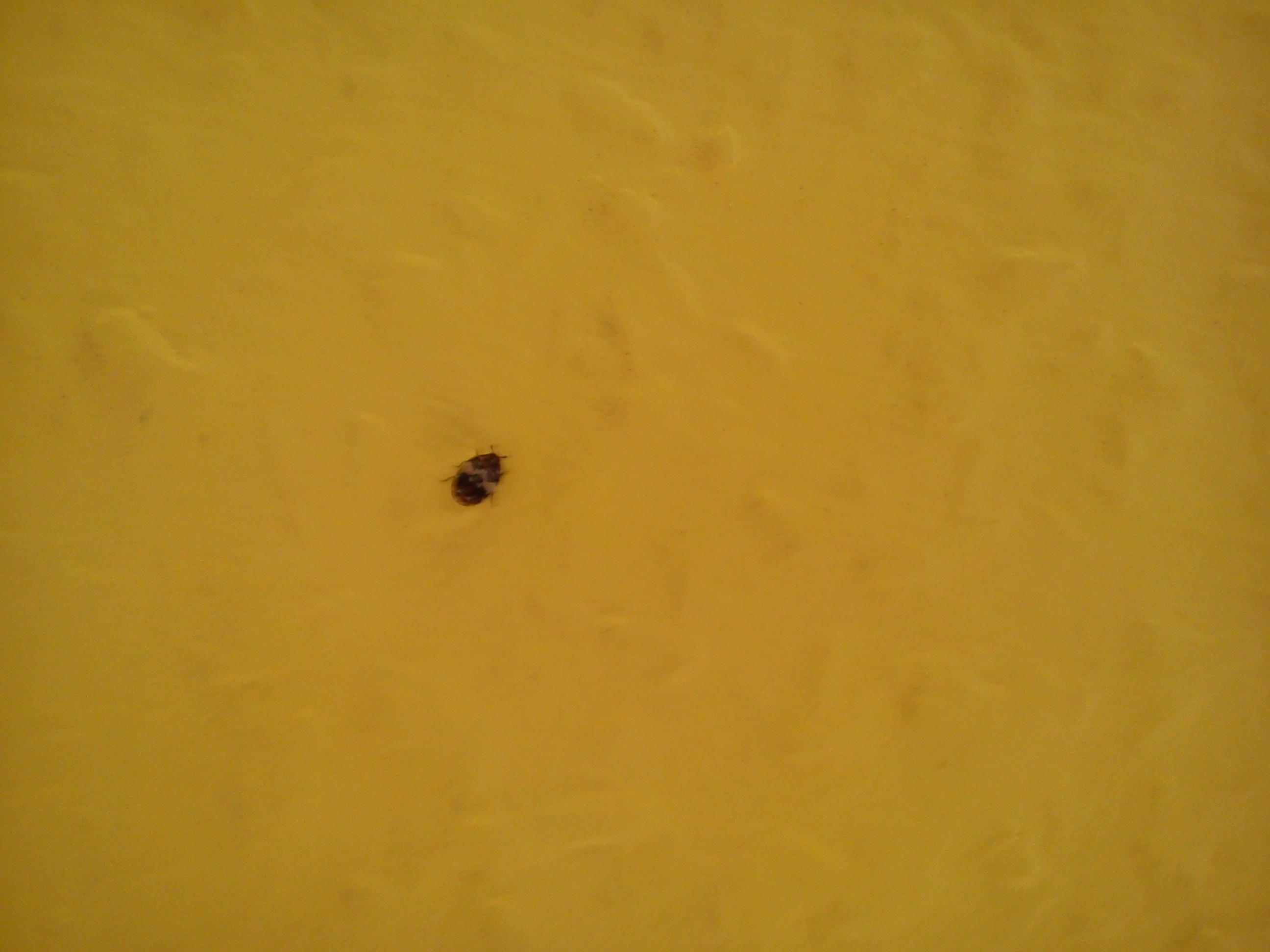 insekten im bett m bel und heimat design inspiration. Black Bedroom Furniture Sets. Home Design Ideas