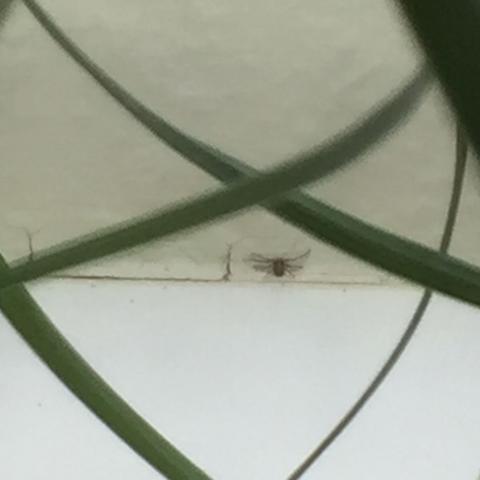 An Der Wand - (Panik, Spinnen)