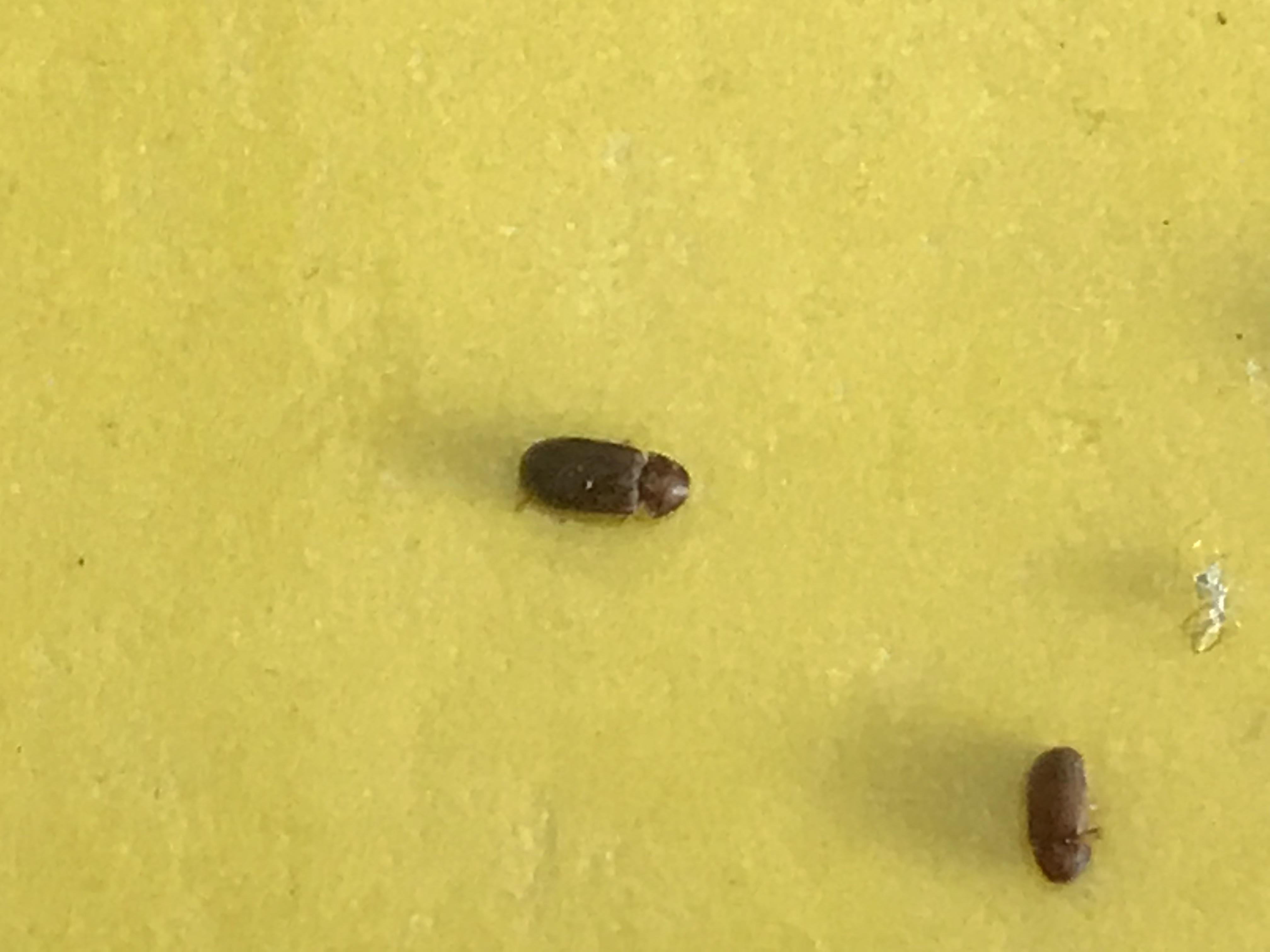 kleine tierchen in der k che weiss wer welche das sind. Black Bedroom Furniture Sets. Home Design Ideas