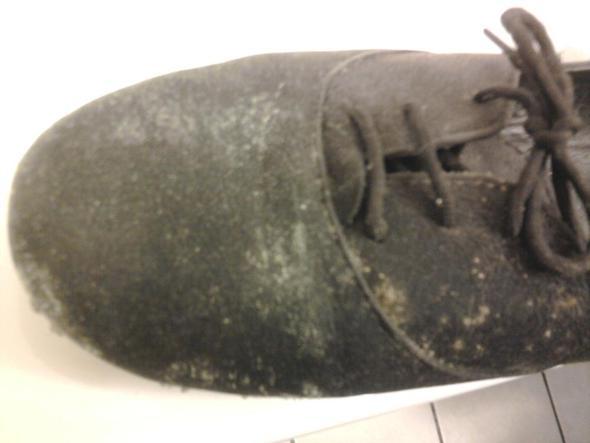 Schuh - (Tiere, Schuhe, Schädlinge)