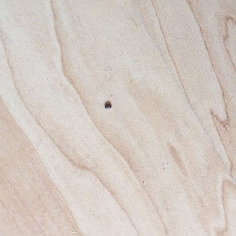 25 kleine krabbeltiere im schlafzimmer bilder beautiful silberfische im schlafzimmer. Black Bedroom Furniture Sets. Home Design Ideas