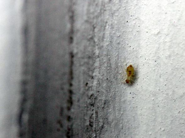 Kleine Tiere in der Wohnung. Was ist das? (Badezimmer)