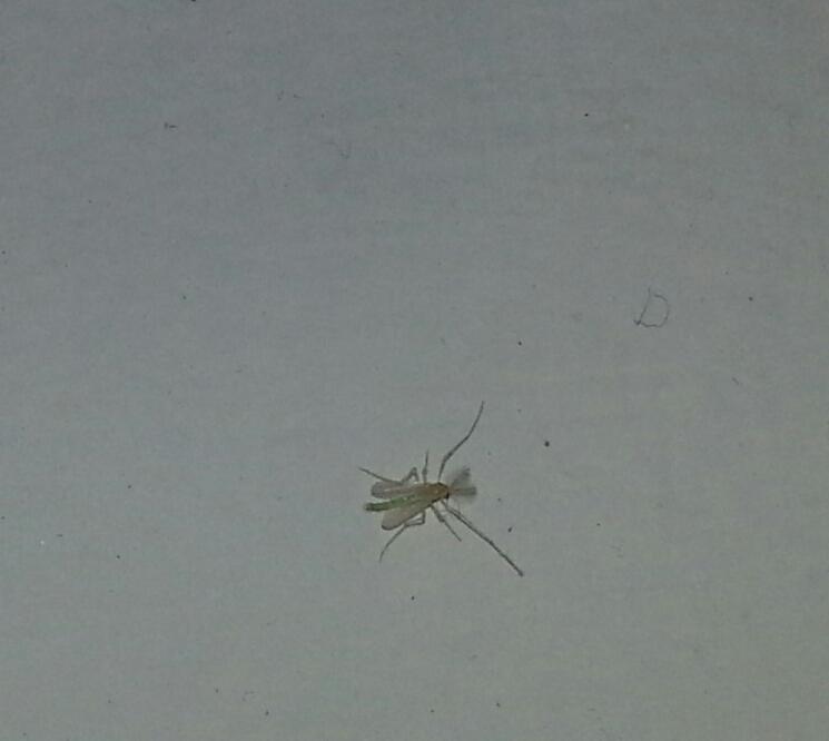 kleine wei e tierchen berall an den fenstern hilfe was ist das tiere insekten. Black Bedroom Furniture Sets. Home Design Ideas