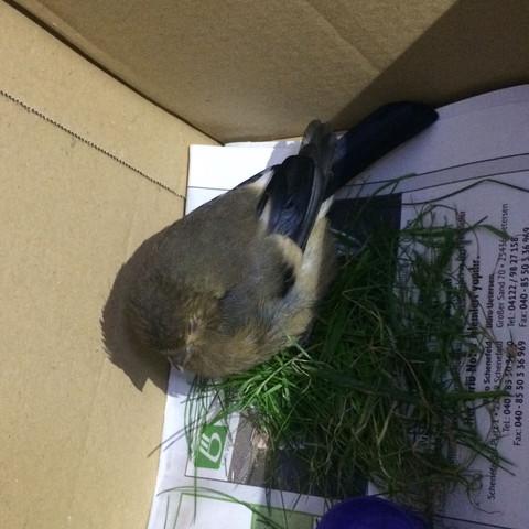 Hier der gefundene Vogel  - (Vögel, finden, klein)