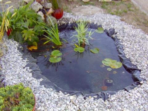 Kleiner Gartenteich Fische Wasser Warme Teich
