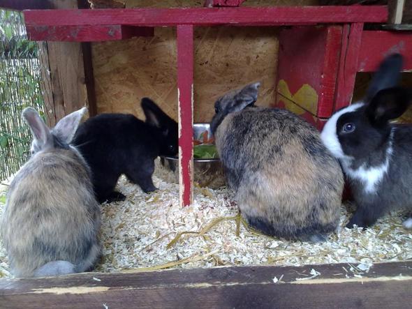 meine 4 Ninchen - (Kaninchen)