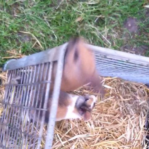 ..... - (Tiere, Kaninchen, klettern)