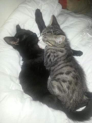 k nnen katzen sich eigentlich gegenseitig lieb haben tiere. Black Bedroom Furniture Sets. Home Design Ideas