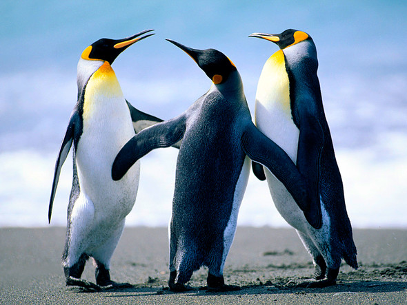 Können Pinguine wirklich nicht fliegen, oder sind sie einfach nur faul?