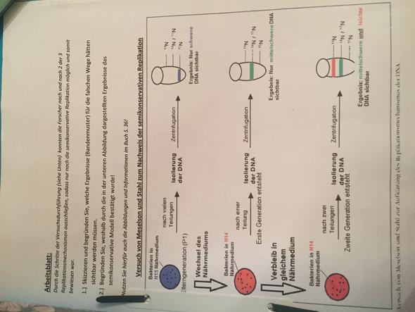 Danke das sind die Hausaufgaben  - (Biologie, Bio, DNA)