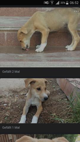 - (Tiere, Hund, Biologie)